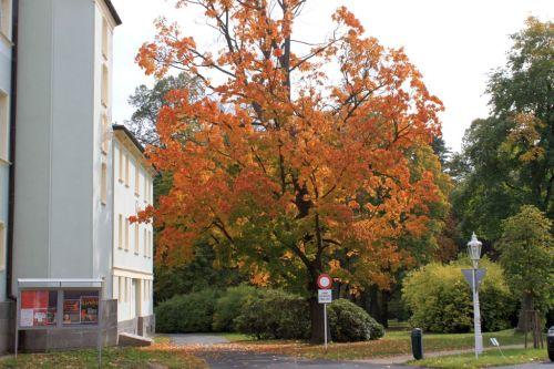 Franzensbad im Herbst 011