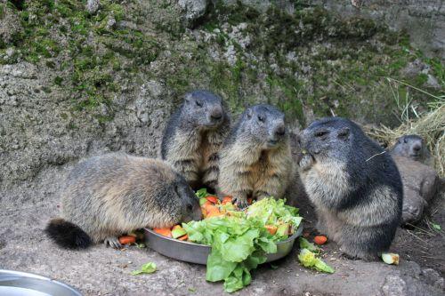 Urlaub 100 Tierpark Neumünster