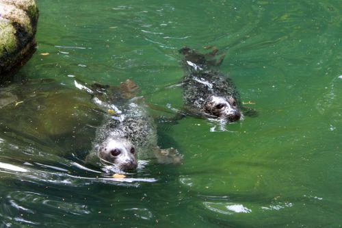 Urlaub 107 Tierpark Neumünster