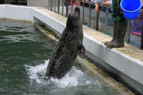 Urlaub 111 Tierpark Neumünster