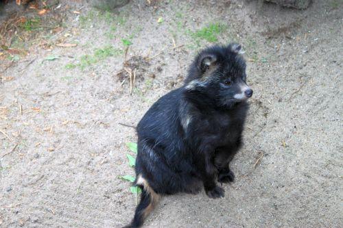 Urlaub 119 Tierpark Neumünster Marderhund