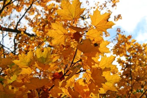 Herbsttag in Franzensbad 002
