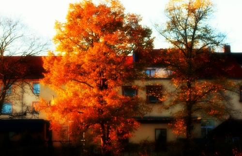 Herbststimmung 001