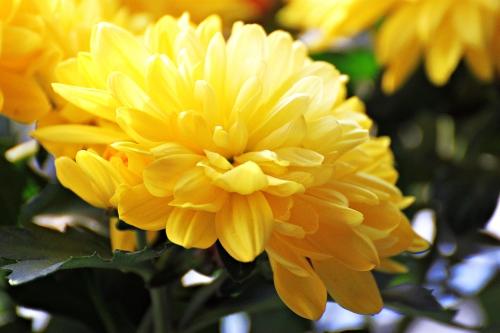 Yellow 009