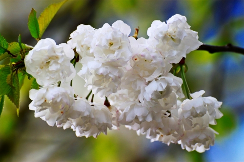 Blüten 004
