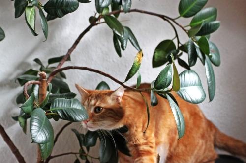Mulder im Baum 02