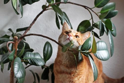 Mulder im Baum 04
