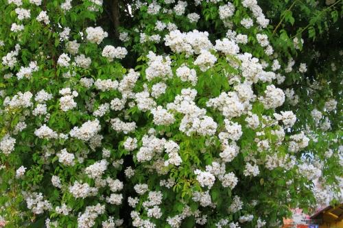 Blütenx 002