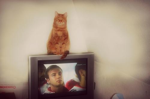 Fernsehkatze 003