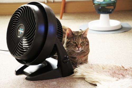 Am Ventilator 004