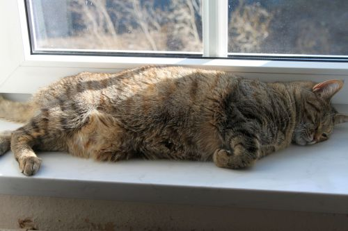 cat-in-sun-02