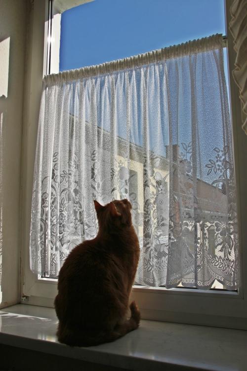 Am Fenster 04