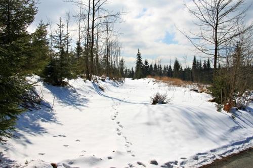Mühlleithen März 015