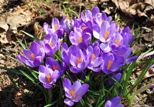 Apriltag (Bad Steben) 004