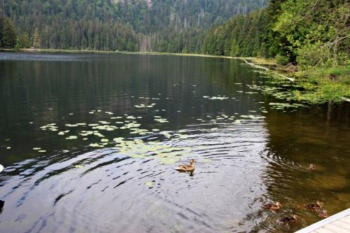 Bayerischer Wald 038Arbersee