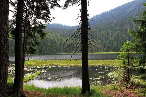 Bayerischer Wald 042Arbersee