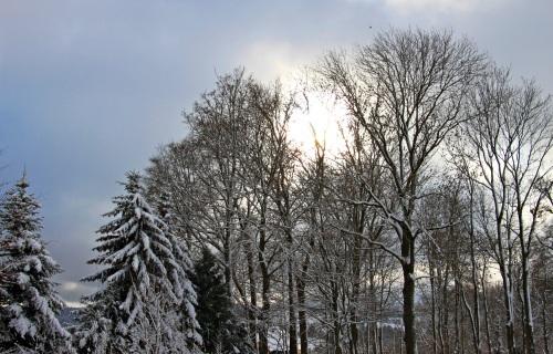 Weihnachtswelt Wohlhausen 014