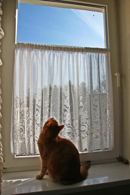 Am Fenster 02