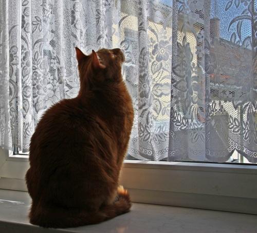 Am Fenster 03